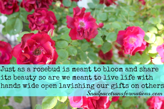 rosebud bloom and share