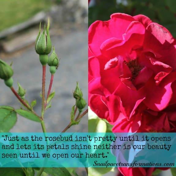 rosebud verse