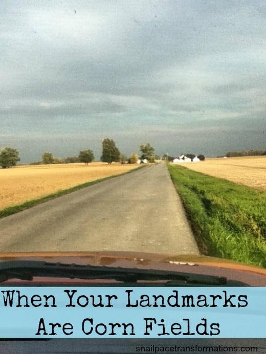 cut corn fields