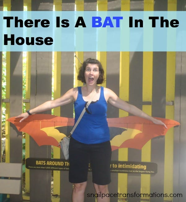 There is a bat in the house