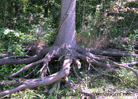 living life roots exposed