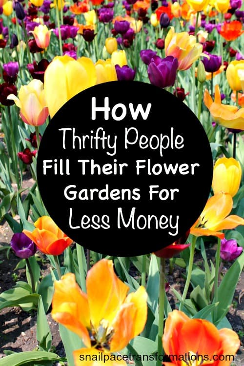 How Thrifty People Fill Their Flower Gardens For Less Money.