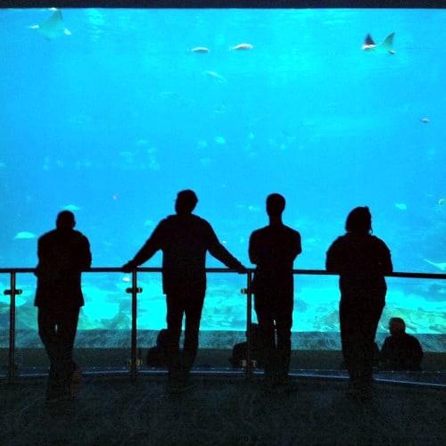 RV Trip Update: Week 1: Atlanta, Georgia Aquarium