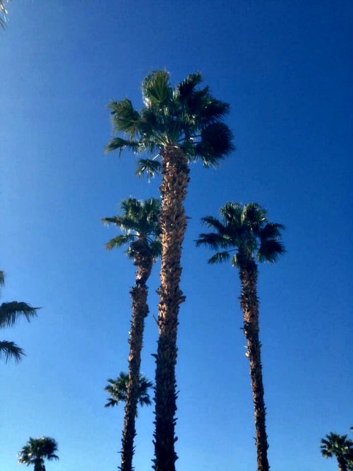 RV trip: Palm trees of Desert Springs