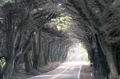 RV Trip Week 11: Arch made of trees found on Highway One in Northern California.