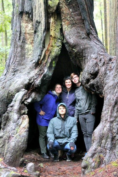 RV Trip Week 11: The Redwoods Of California.