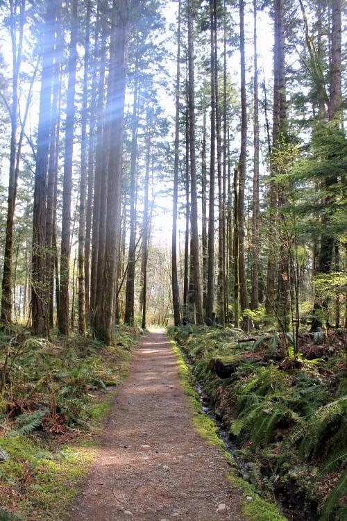RV Trip Update Week 13: Seal Bay Park, Comox Valley, B.C. .