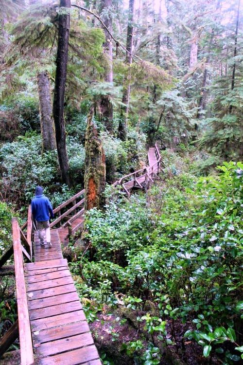 RV Trip Update Week 13: Rain forest in Tofino.
