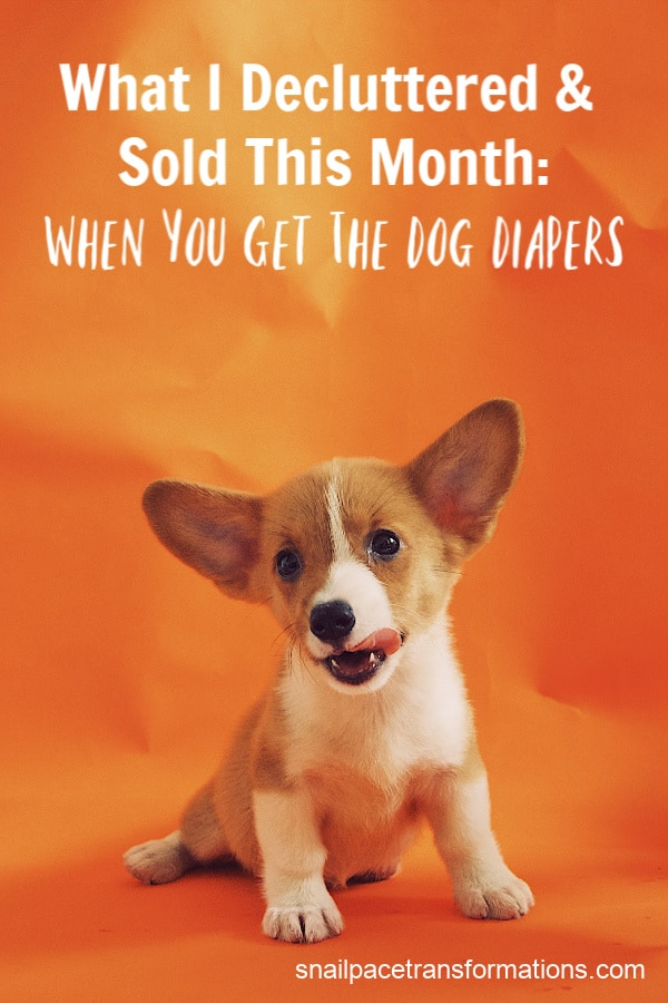 When you get the dog diapers, you just might end up decluttering a good portion of your home!